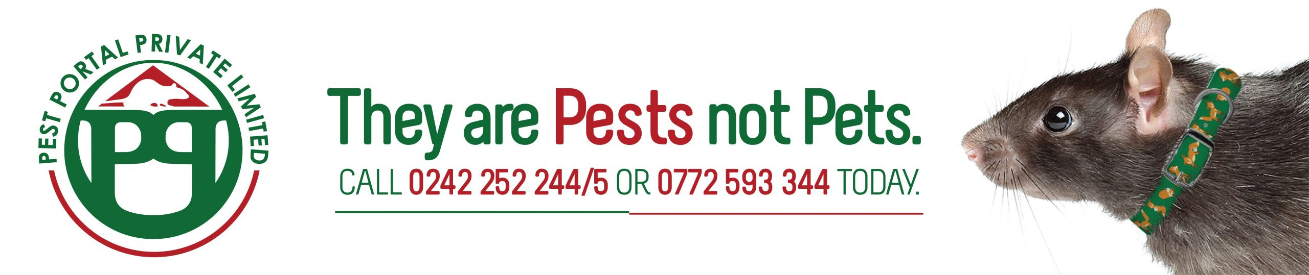Pest control harare